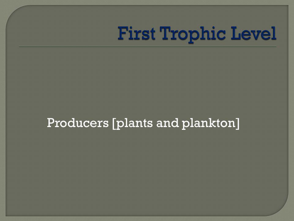 First Trophic Level Producers [plants and plankton]